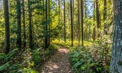 Path_trees1