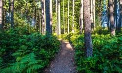 cedars-walking-trails-west